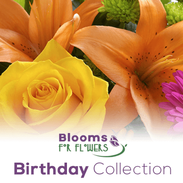 Send Some Birthday Joy With Our Birthday Collection!