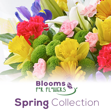 Spring Flower Collection - Blooms for Flowers Glasgow