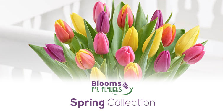 Blooms For Flowers Glasgow First Choice Florist Glasgow G1